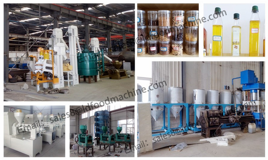 Sunflower Oil Extraction Plant Overview