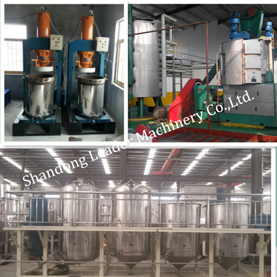 Screw Type Automatic peanut oil making machine|Small cold press oil plant