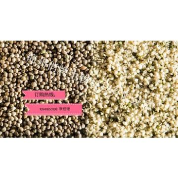 Hulled Hemp Seed from China!